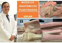 UDLAP emplea modelos anatómicos por plastinación para el estudio de la cuerpo humana